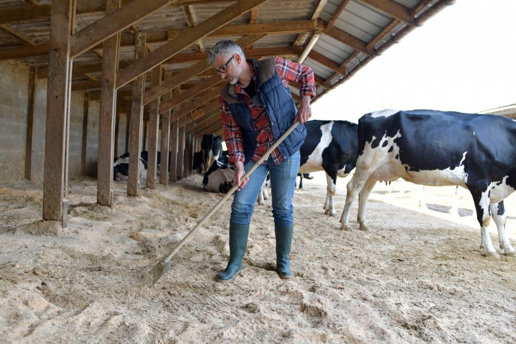 Farmer cleaning cow shed