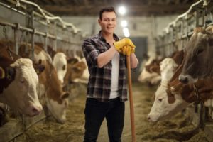 Farmer in cow stable
